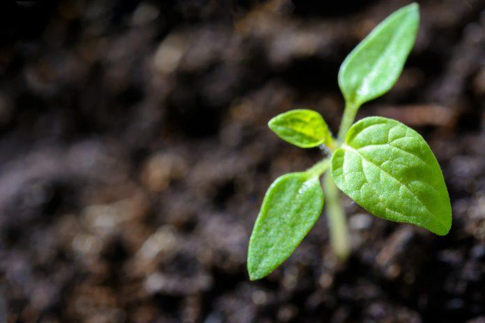 klein plantje