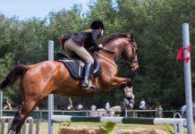 amazone en paard