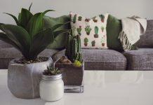 Mooie planten die ook nog eens goed zijn voor de lucht in huis